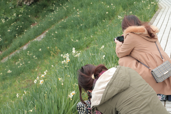 越前海岸の水仙をインスタジェニックに撮る♡カメラ女子講座_a0189805_13482453.jpg