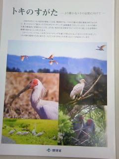 明日、明後日と朱鷺を観に佐渡行きです。_b0255217_17503856.jpg