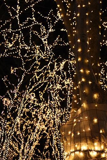Merry Christmas! 2018_b0259218_05233672.jpg