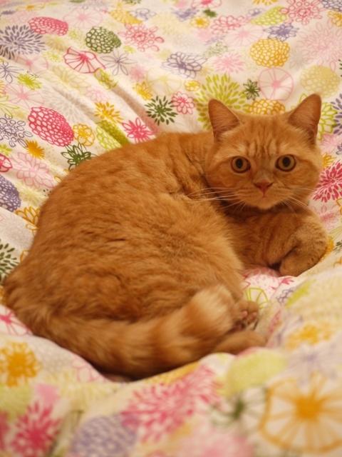 猫のお留守番 みかんちゃん編。_a0143140_20043624.jpg