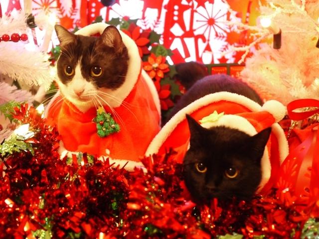 クリスマス猫 みるきぃめりぃぽぴんず編。_a0143140_22132901.jpg