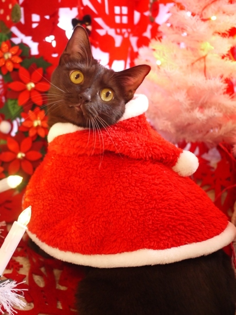 クリスマス猫 あんしゃぁりぃ編。_a0143140_22185433.jpg