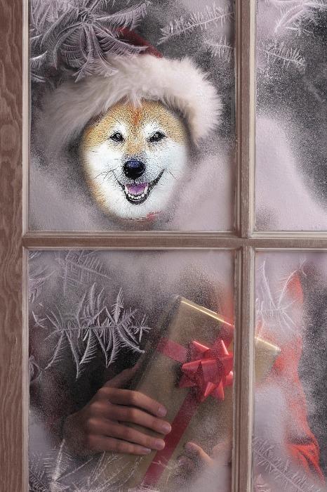 Merry Christmas_b0314043_07403769.jpg