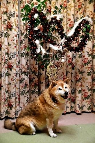 Merry Christmas_b0314043_21473820.jpg