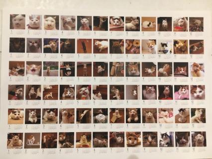 うちの猫らカレンダー通販始めます!_a0028451_19134979.jpg