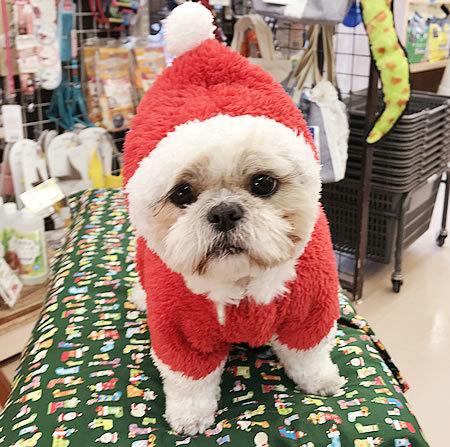 クリスマスコスプレ~ その4_e0362456_19051090.jpg