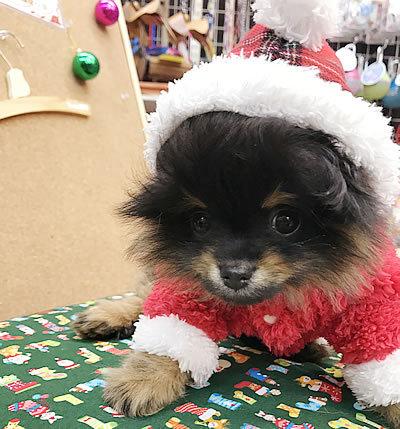 クリスマスコスプレ~ その4_e0362456_19054832.jpg