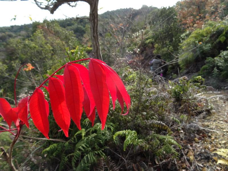 孝子の森で「里山クリスマス」(ピザ職人体験&ケーキつくり)_c0108460_20065743.jpg
