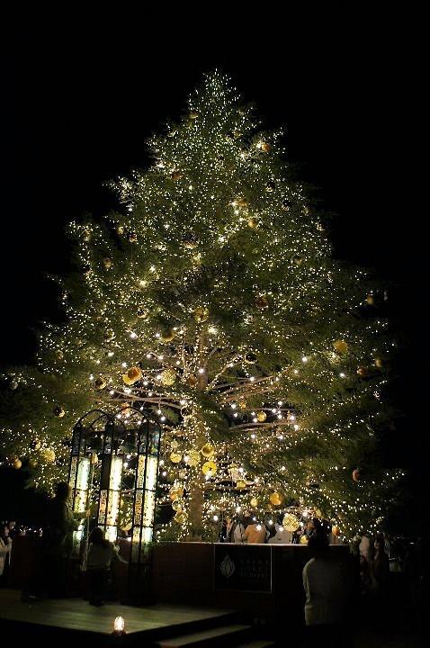 みなとみらいのクリスマスツリー_a0355365_12304021.jpg
