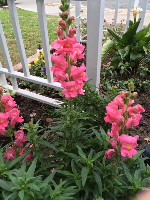 12月の我が家の庭_e0350971_14234899.jpg
