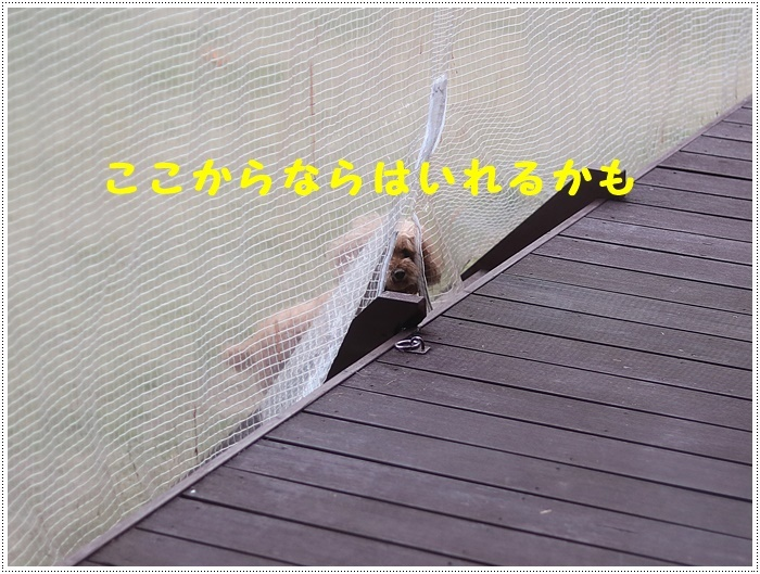 b0175688_00163704.jpg