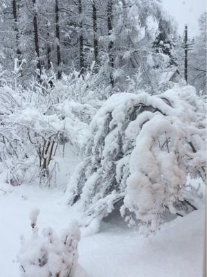 しっとり雪景色_a0096989_10491590.jpg