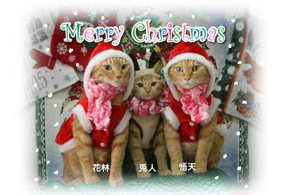 Merry Christmas〜♬兎人・花林・悟天・ソーだ・ロキ・ソー・レオ_d0071596_20532775.jpg