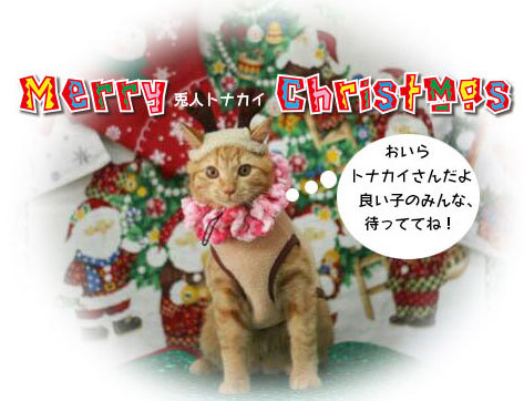 Merry Christmas〜♬兎人・花林・悟天・ソーだ・ロキ・ソー・レオ_d0071596_20535054.jpg