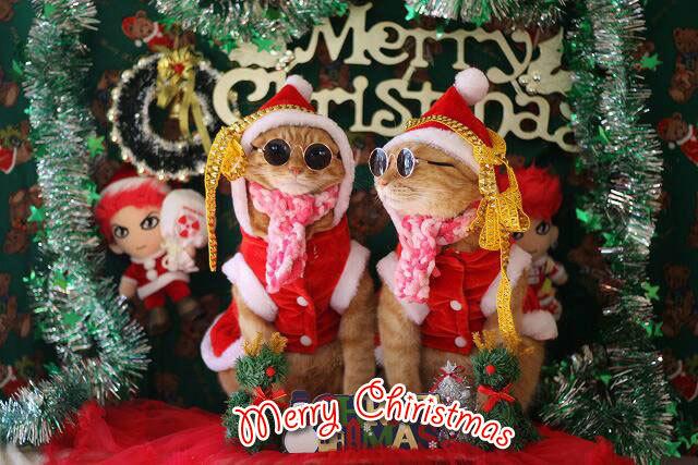 Merry Christmas〜♬兎人・花林・悟天・ソーだ・ロキ・ソー・レオ_d0071596_20551637.jpg