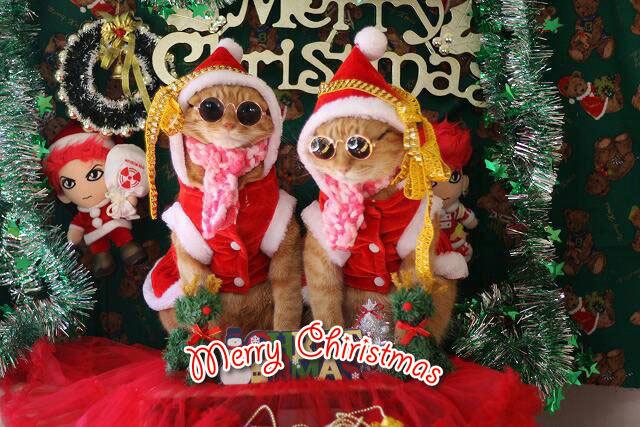 Merry Christmas〜♬兎人・花林・悟天・ソーだ・ロキ・ソー・レオ_d0071596_20553385.jpg
