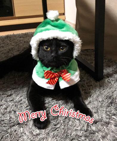 Merry Christmas〜♬兎人・花林・悟天・ソーだ・ロキ・ソー・レオ_d0071596_20593385.jpg