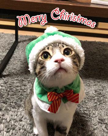 Merry Christmas〜♬兎人・花林・悟天・ソーだ・ロキ・ソー・レオ_d0071596_21000995.jpg