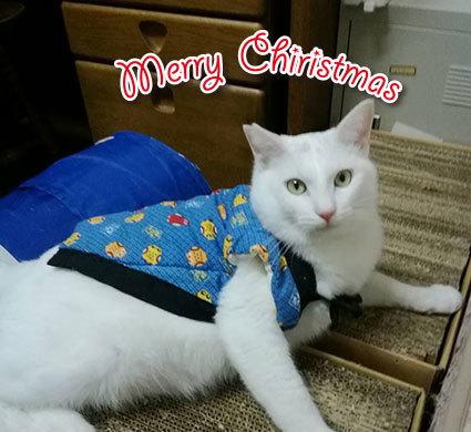 Merry Christmas〜♬兎人・花林・悟天・ソーだ・ロキ・ソー・レオ_d0071596_21360008.jpg