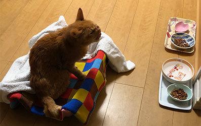 Merry Christmas〜♬兎人・花林・悟天・ソーだ・ロキ・ソー・レオ_d0071596_21412945.jpg