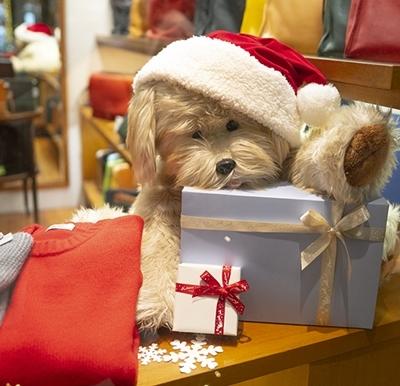 山手西洋館・世界のクリスマス2018・ベーリック・ホール_b0145398_20270826.jpg