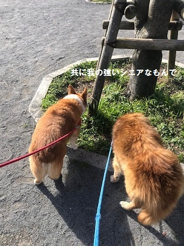 イヴは散歩三昧と、そして♪♪_f0242002_14273231.jpg