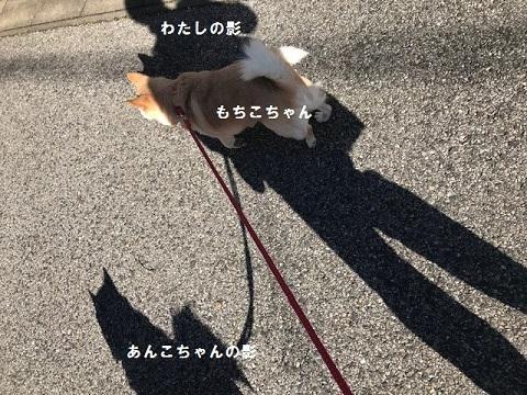 イヴは散歩三昧と、そして♪♪_f0242002_14433513.jpg