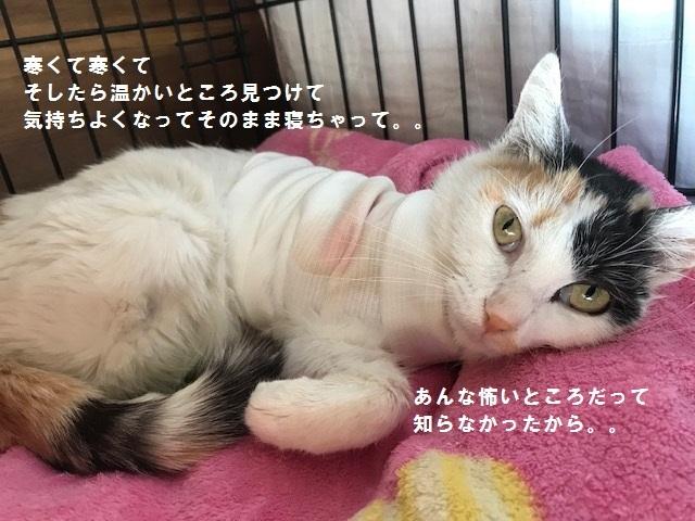 猫バンバン_f0242002_15120080.jpg