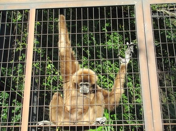 類人猿と散歩_b0203907_22553587.jpg