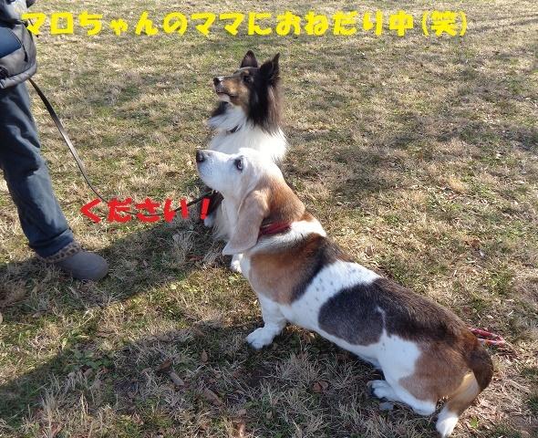 f0121712_14204537.jpg