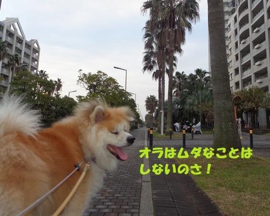 f0121712_14420202.jpg
