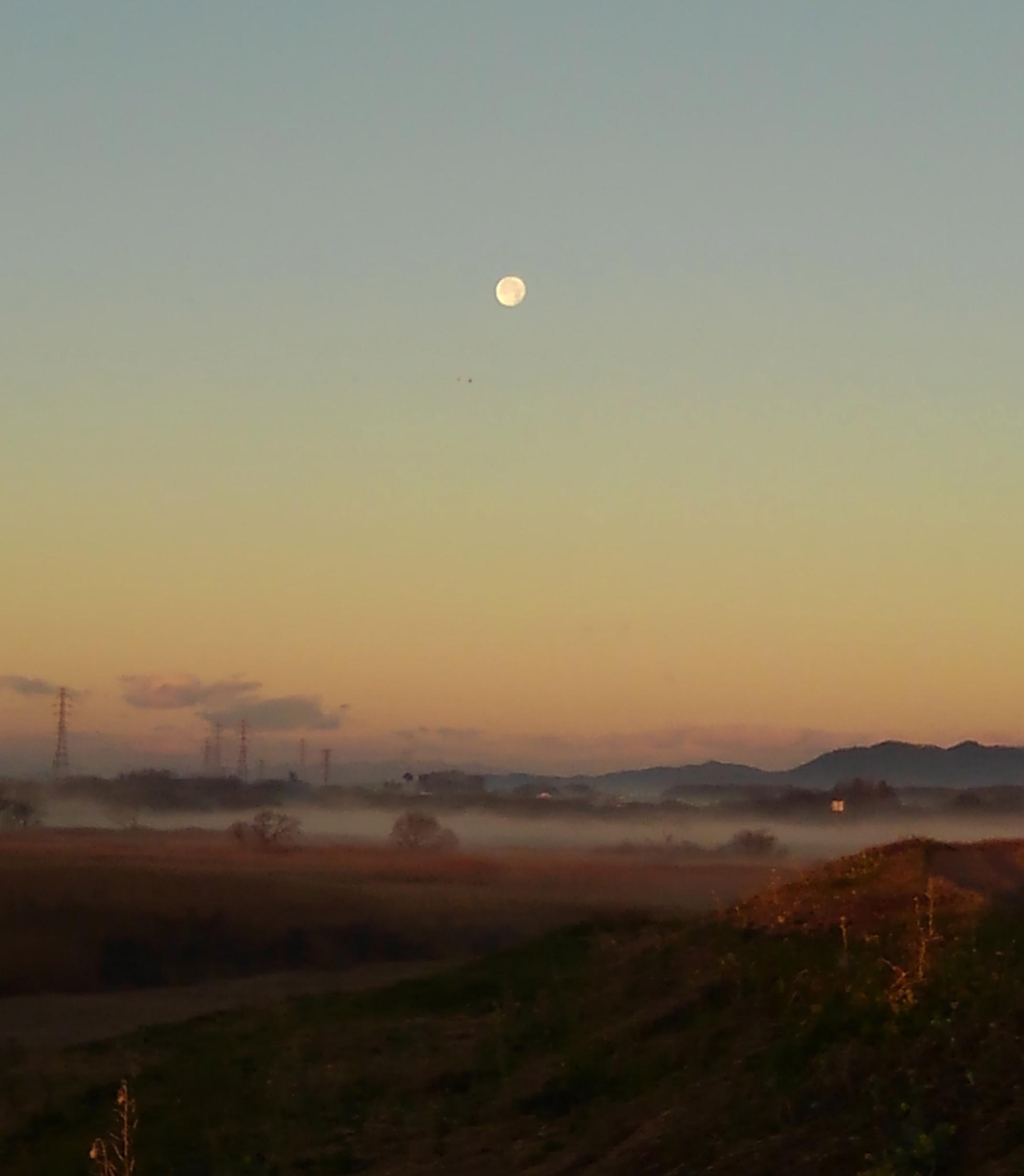 ツルシギ・ハマシギの飛翔を撮る_f0239515_16204070.jpg