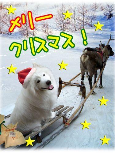 メリークリスマス♪_c0062832_16375095.jpg
