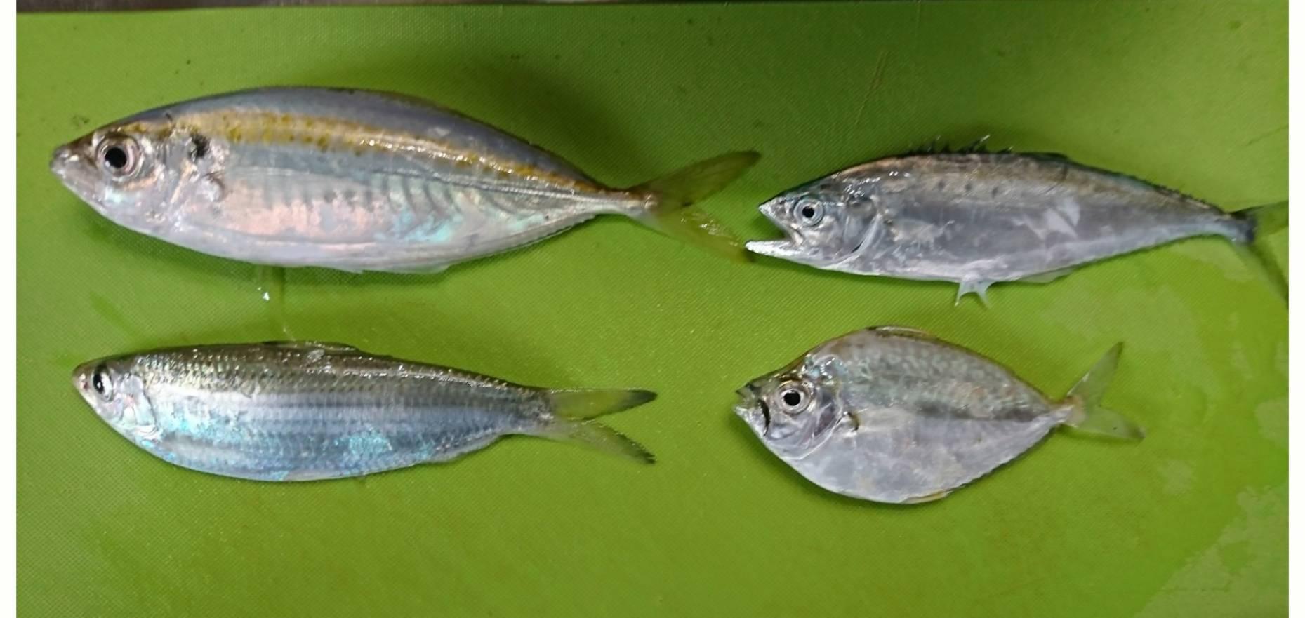 釣り…_a0167338_23060587.jpg