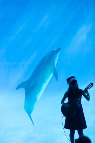 名古屋港水族館さんでの演奏、ありがとうございました。その1_f0373339_12414209.jpg