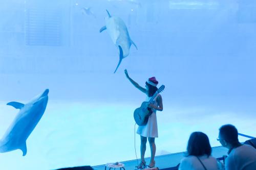 名古屋港水族館さんでの演奏、ありがとうございました。その2_f0373339_14281628.jpg