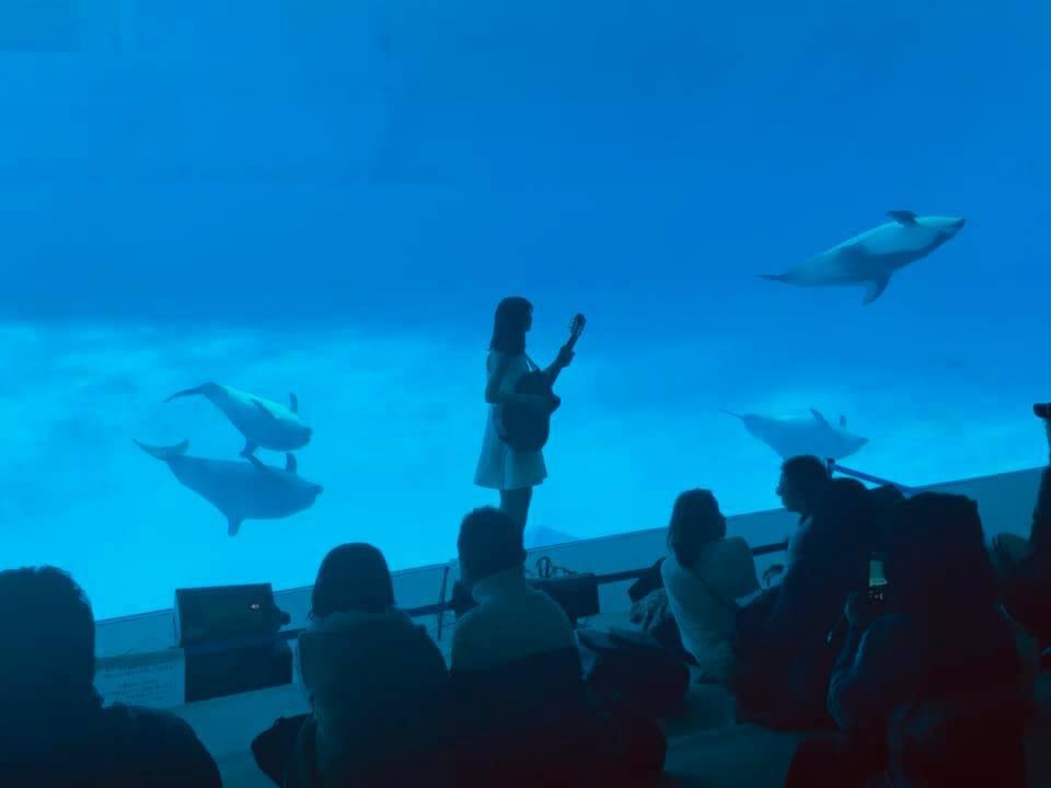 名古屋港水族館さんでの演奏、ありがとうございました。その2_f0373339_15061093.jpg