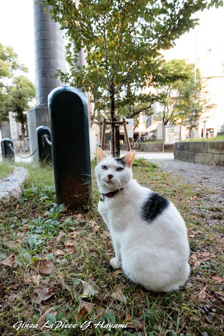 猫のいる風景 近所の黒白ちゃん_b0133053_00030644.jpg