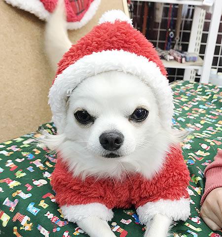 メリークリスマス♪_e0362456_19282729.jpg