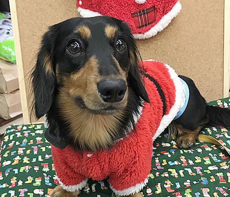 メリークリスマス♪_e0362456_19283683.jpg