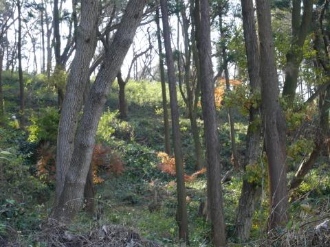 公園内外から色付いたモミジが見える!12.21六国見山臨時_c0014967_06382536.jpg