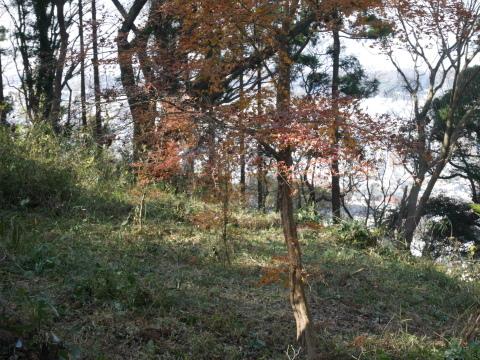 公園内外から色付いたモミジが見える!12.21六国見山臨時_c0014967_06390330.jpg
