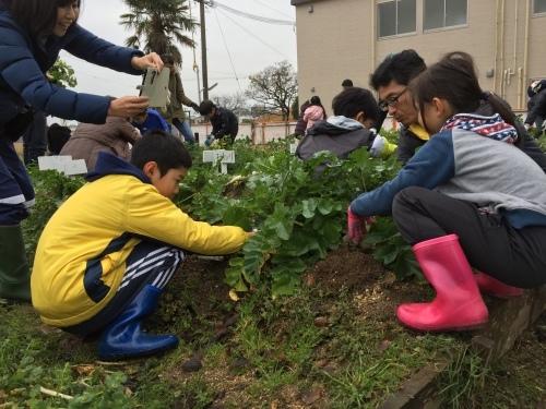 みんなで大根の収穫をしました♪_f0079749_12211284.jpg