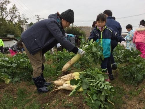みんなで大根の収穫をしました♪_f0079749_12220829.jpg
