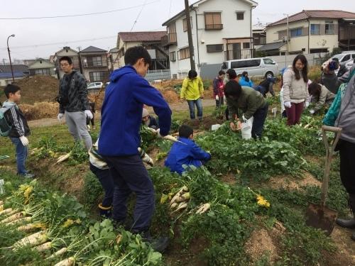 みんなで大根の収穫をしました♪_f0079749_12261513.jpg