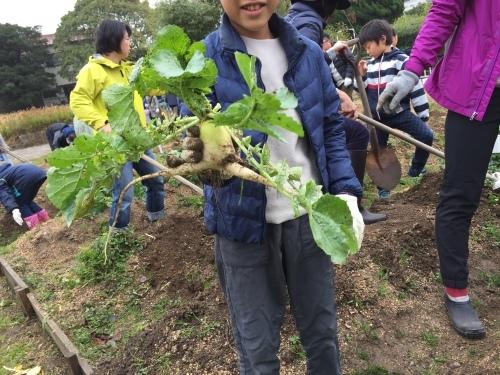 みんなで大根の収穫をしました♪_f0079749_12304179.jpg