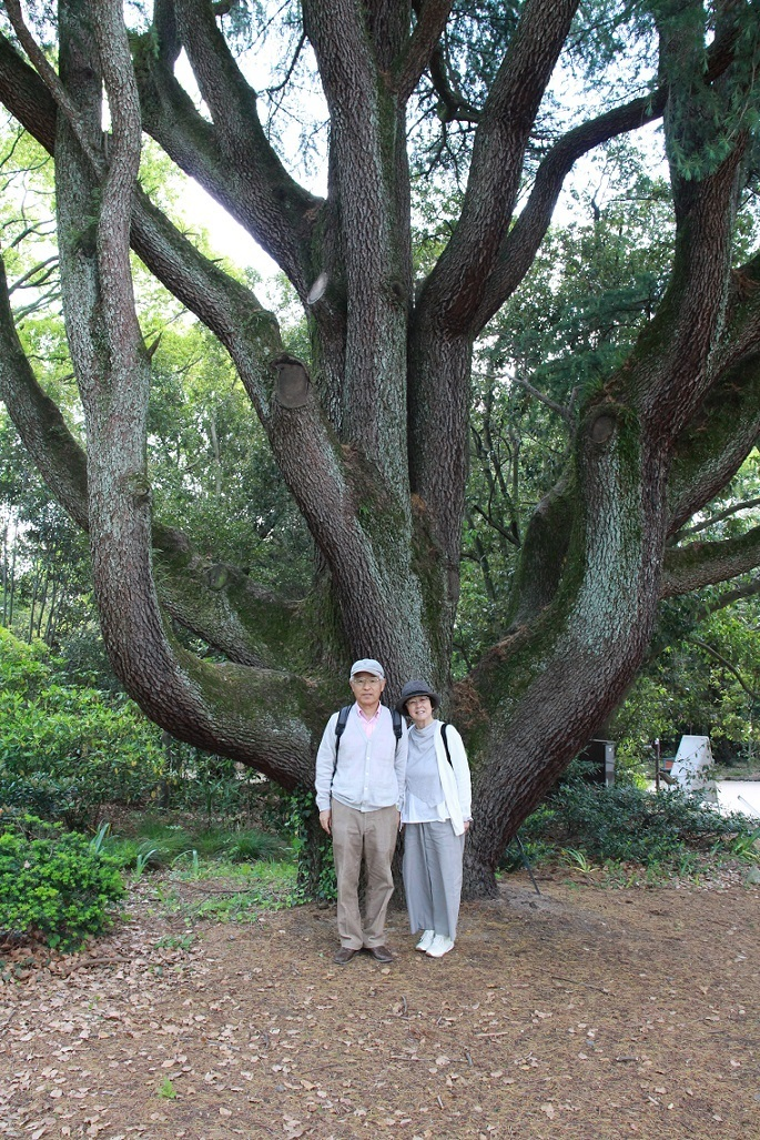 年賀状写真  ~京都府立植物園・ヒマラヤ杉~_a0107574_19594733.jpg