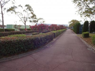 富浜緑地にて、サザンカの花が咲いています♫_d0338682_08581753.jpg