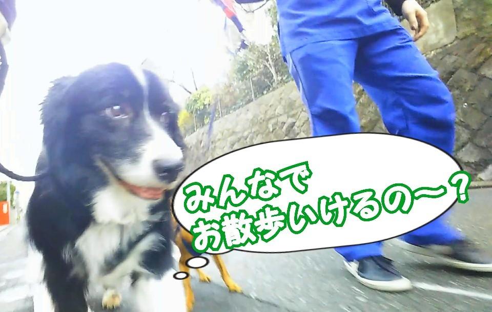 お散歩お散歩♪_f0357682_18065551.jpg