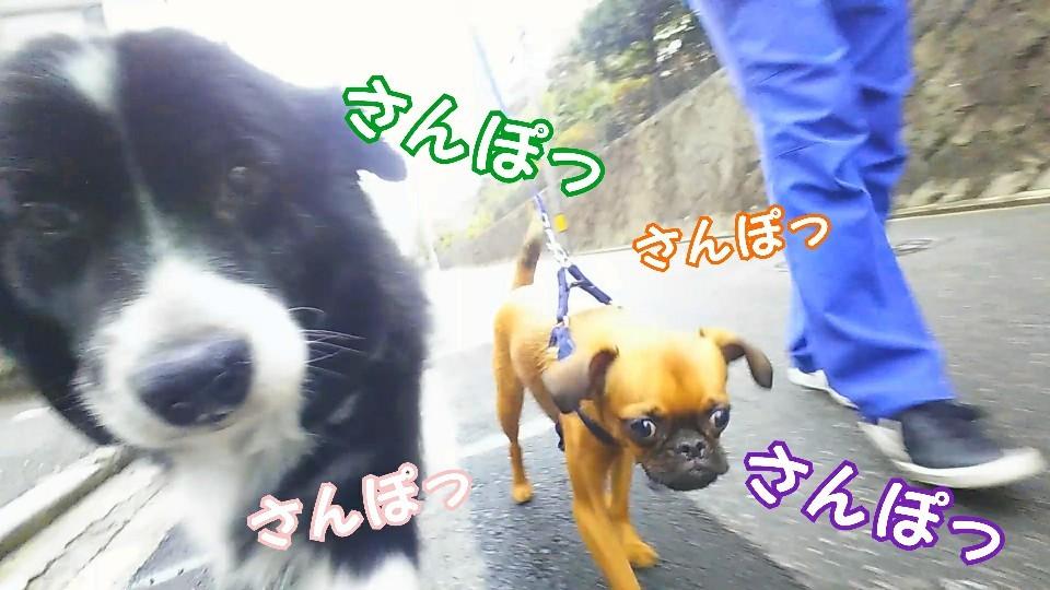 お散歩お散歩♪_f0357682_18065571.jpg